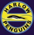 Harlow Penguins